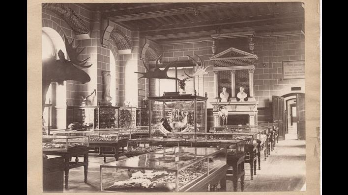 Widok na salę I Musée des Antiquités nationales, ok. 1867, Saint-Germain-en-Laye, musée  d'Archéologie nationale et domaine national de Saint-Germain-en-Laye, źródło: https://francearchives.fr/fr/commemo/recueil-2017/26287906